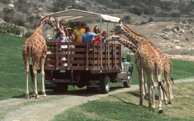 San Diego Zoo Safari Park Tour Wild Animal Park Safari Adventure In Califor